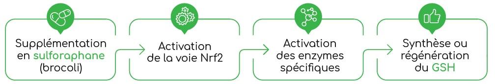 Brocoli sulforaphane et glutathion Nutrixeal Info