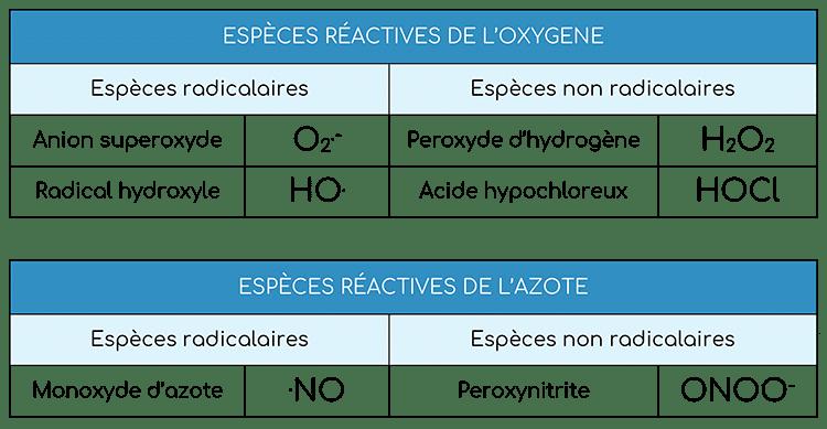 Espèces réactives classification - Nutrixeal Info