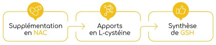 NAC n-acetyl-cysteine et glutathion Nutrixeal Info