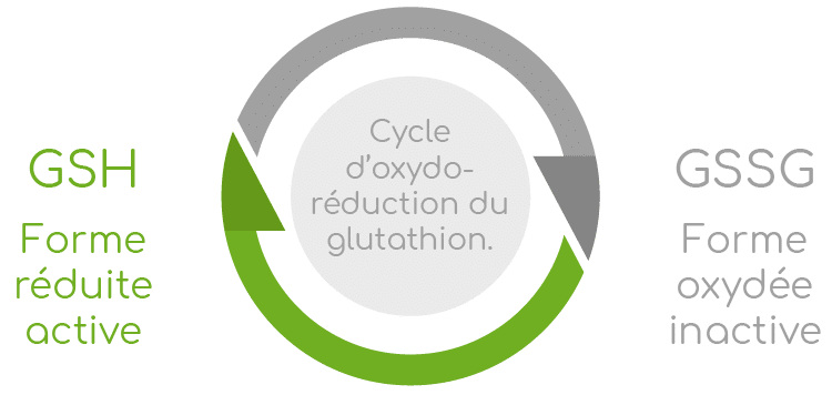 oxydo-reduction glutathion Nutrixeal Info