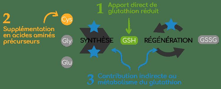 strategies de supplémentation glutahtion GSH Nutrixeal Info